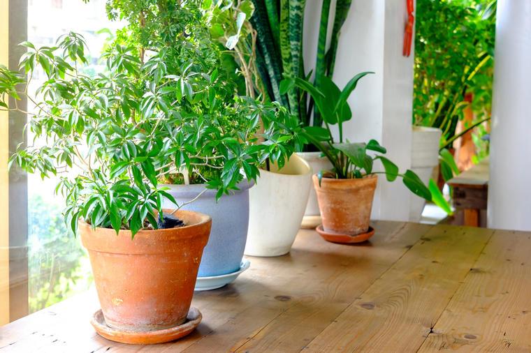 Rast sobnih biljaka