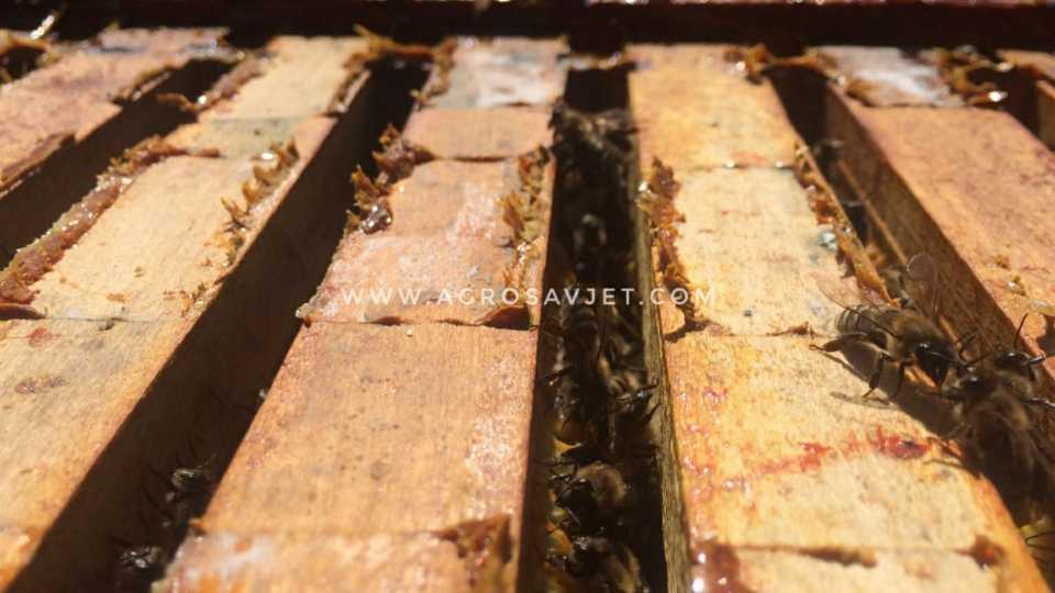 pčelinji ramovi i pčele