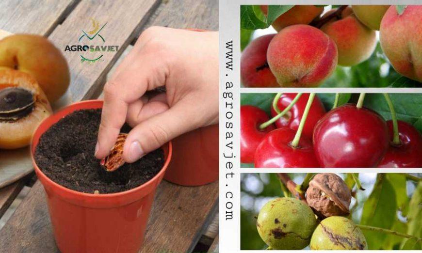 sadnja voćaka iz koštice/košpice