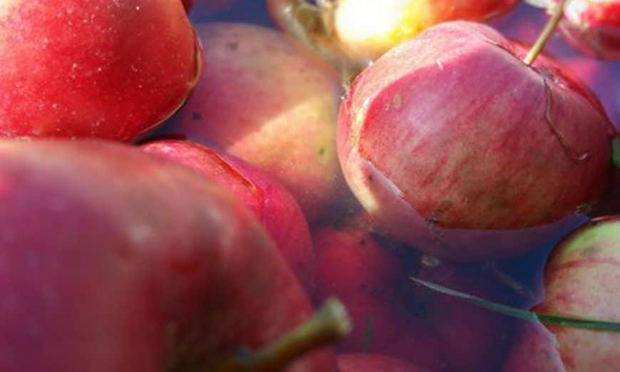 čuvanje jabuka