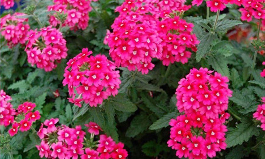 Cvijeće koje cvjeta