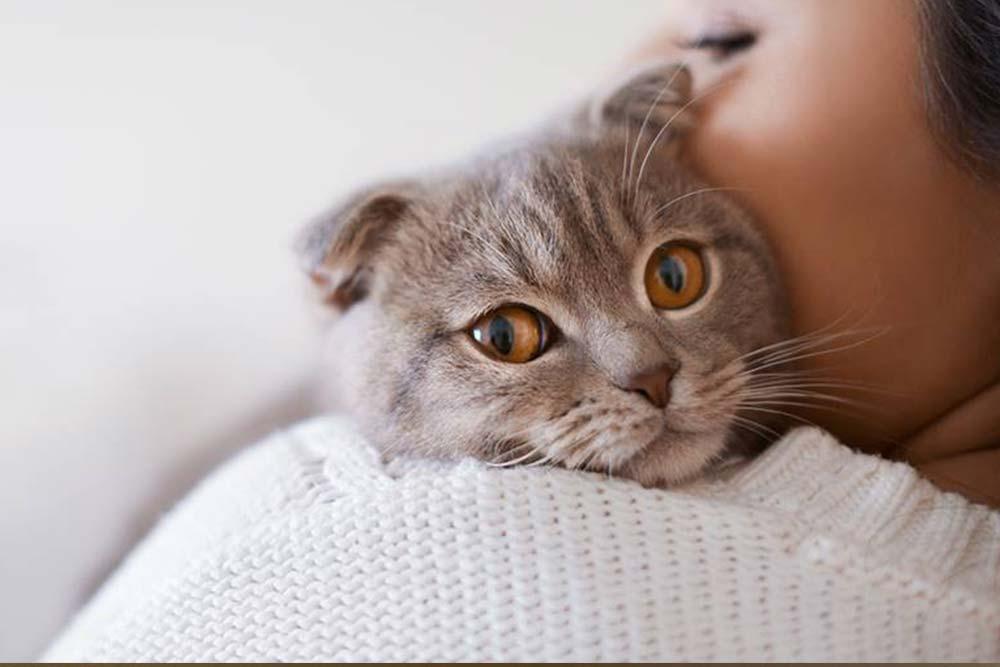 Predenje mačke