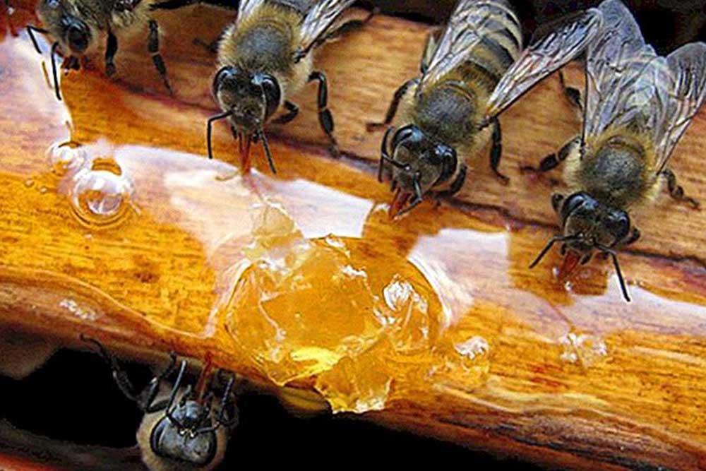 Čime i kada prihranjivati pčele