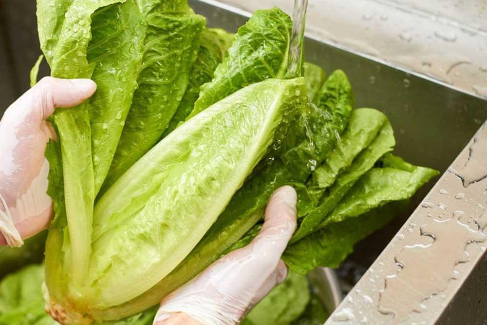Sačuvajte zelenu salatu