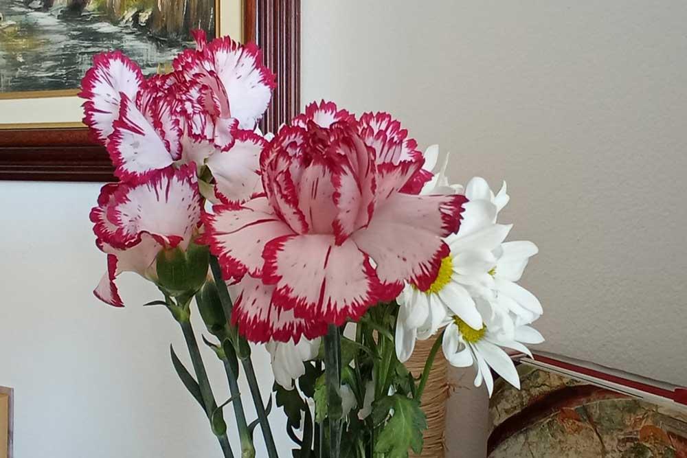 Cvijeće za 8. mart