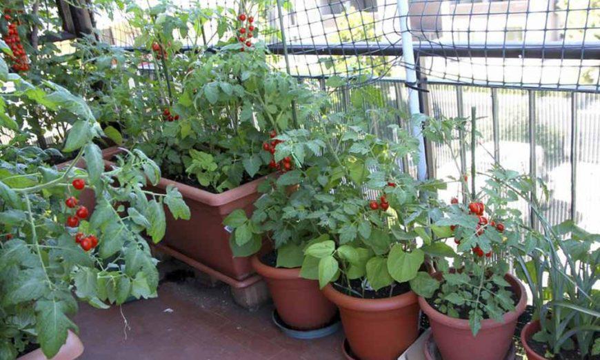 Gajenje povrća na balkonu