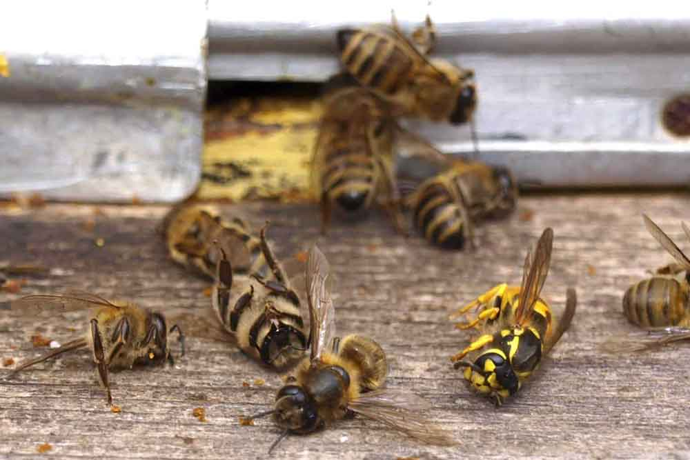 Simptomi trovanja pčela