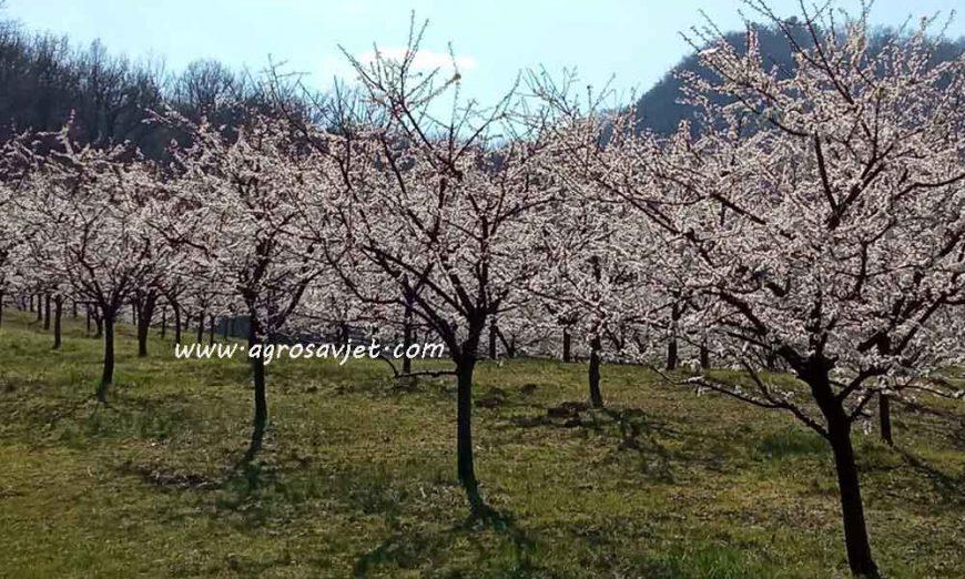 Obrada zemljišta u voćnjaku