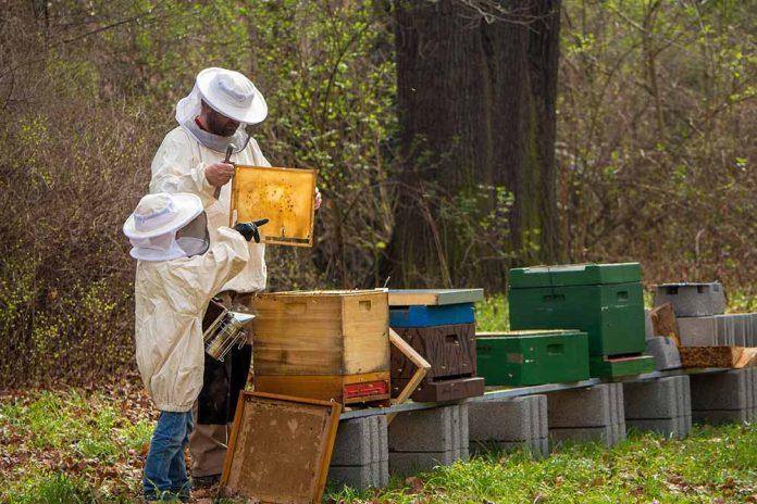 pčelar
