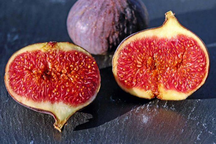 plod smokve